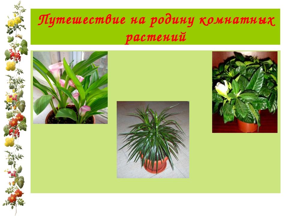 Путешествие на родину комнатных растений