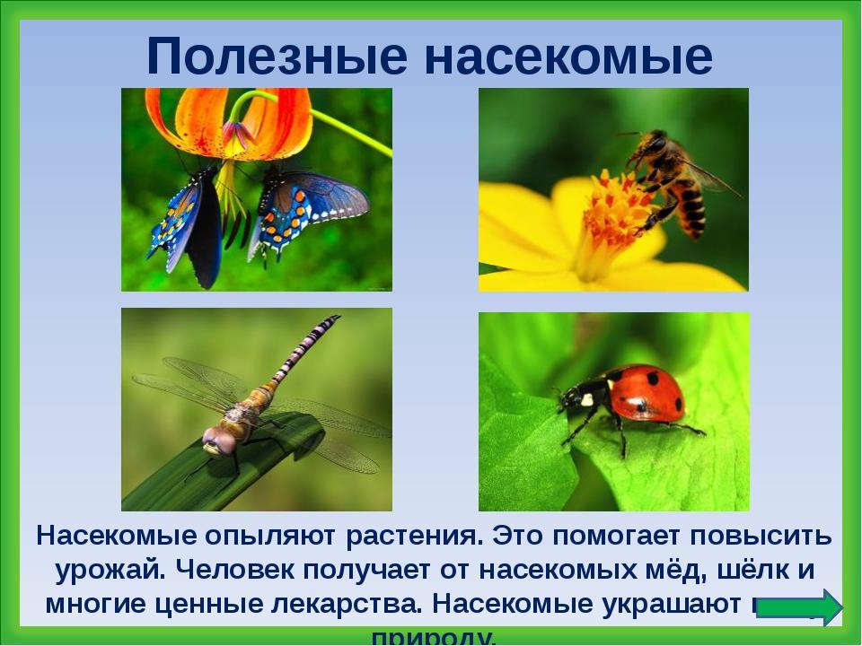 вредные и полезные насекомые с картинками сегодняшний