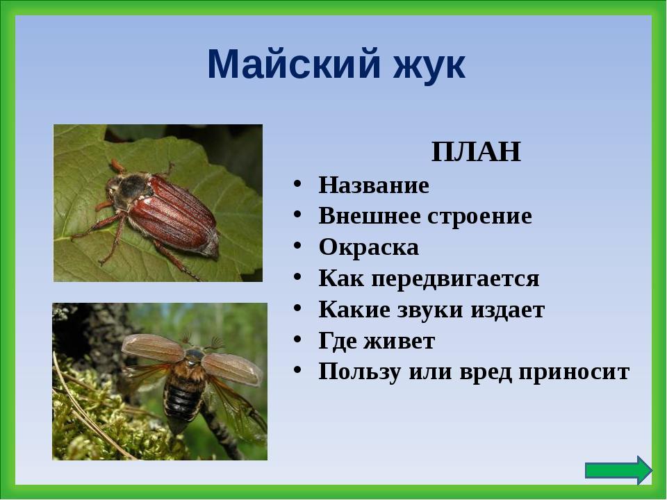 Майский жук ПЛАН Название Внешнее строение Окраска Как передвигается Какие зв...