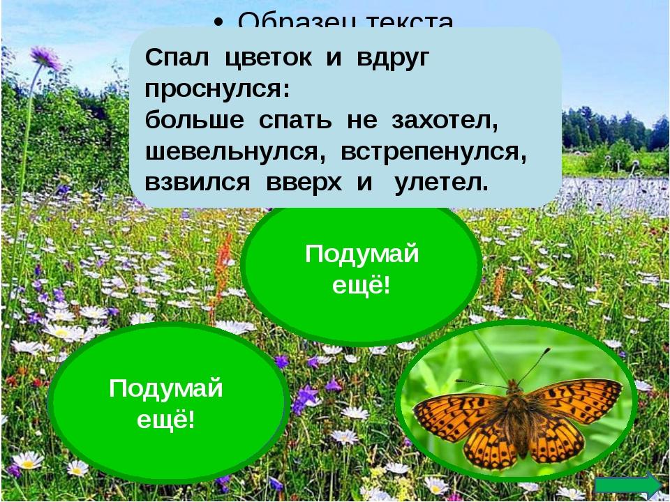Подумай ещё! Подумай ещё! Спал цветок и вдруг проснулся: больше спать не зах...