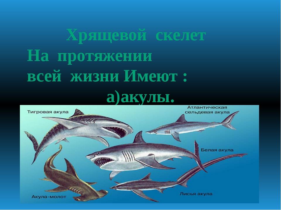 Хрящевой скелет На протяжении всей жизни Имеют : а)акулы.