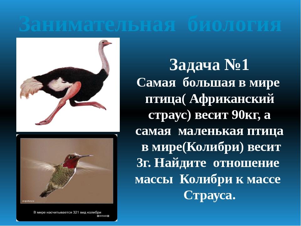 Занимательная биология Задача №1 Самая большая в мире птица( Африканский стра...