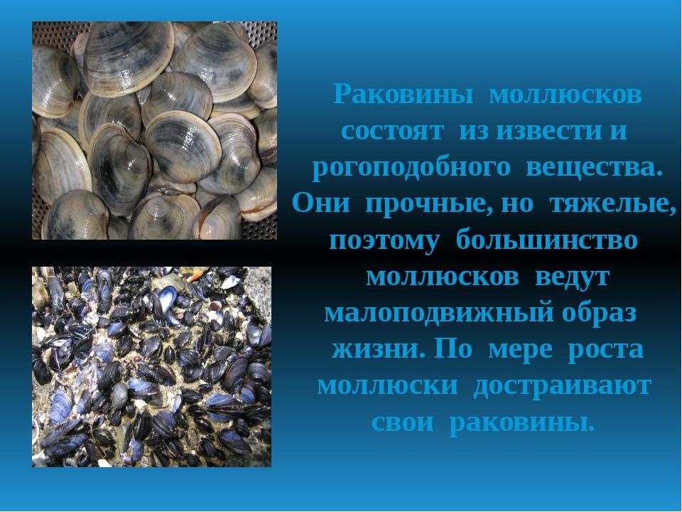 Раковины моллюсков состоят из извести и рогоподобного вещества. Они прочные,...