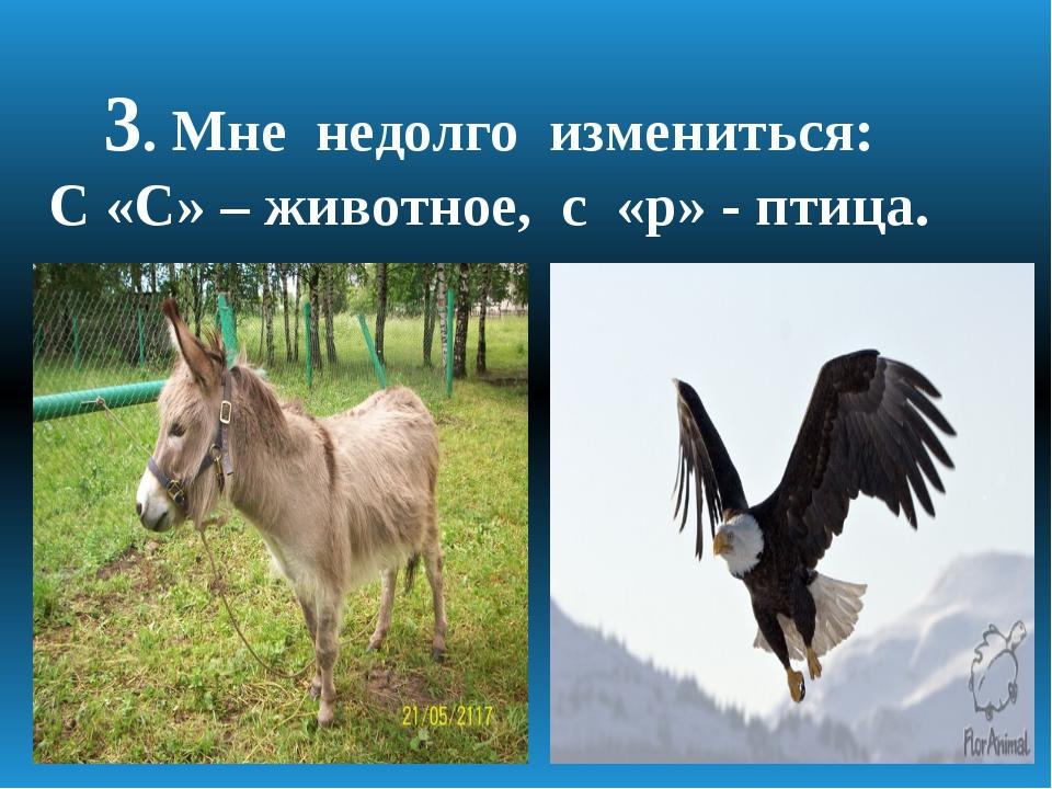 3. Мне недолго измениться: С «С» – животное, с «р» - птица.