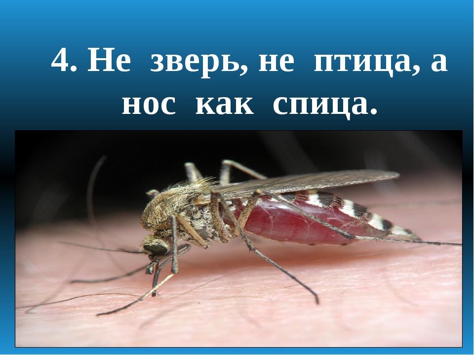 4. Не зверь, не птица, а нос как спица.