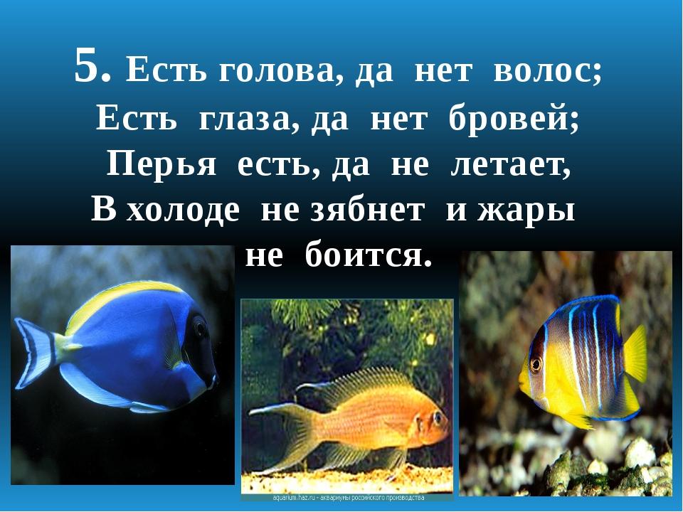 5. Есть голова, да нет волос; Есть глаза, да нет бровей; Перья есть, да не ле...