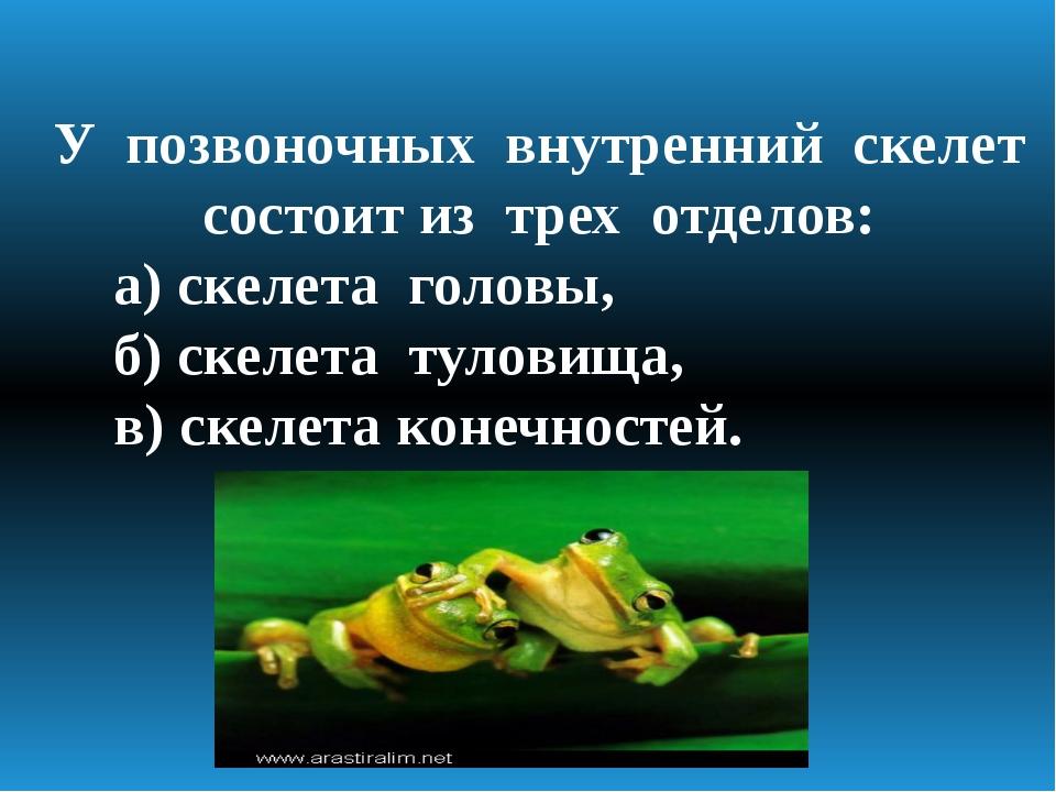 У позвоночных внутренний скелет состоит из трех отделов: а) скелета головы, б...