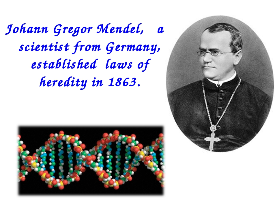 Johann Gregor Mendel, a scientist from Germany, established laws of heredity...