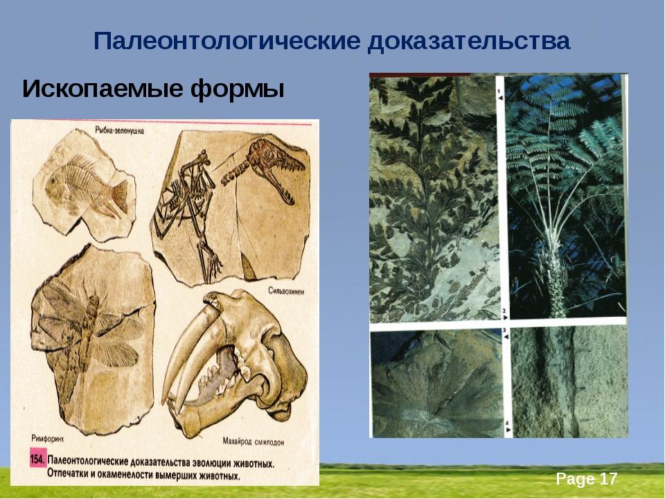 Палеонтологические доказательства Ископаемые формы Powerpoint Templates Page