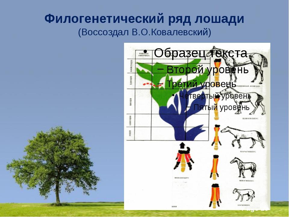 Филогенетический ряд лошади (Воссоздал В.О.Ковалевский) Powerpoint Templates...