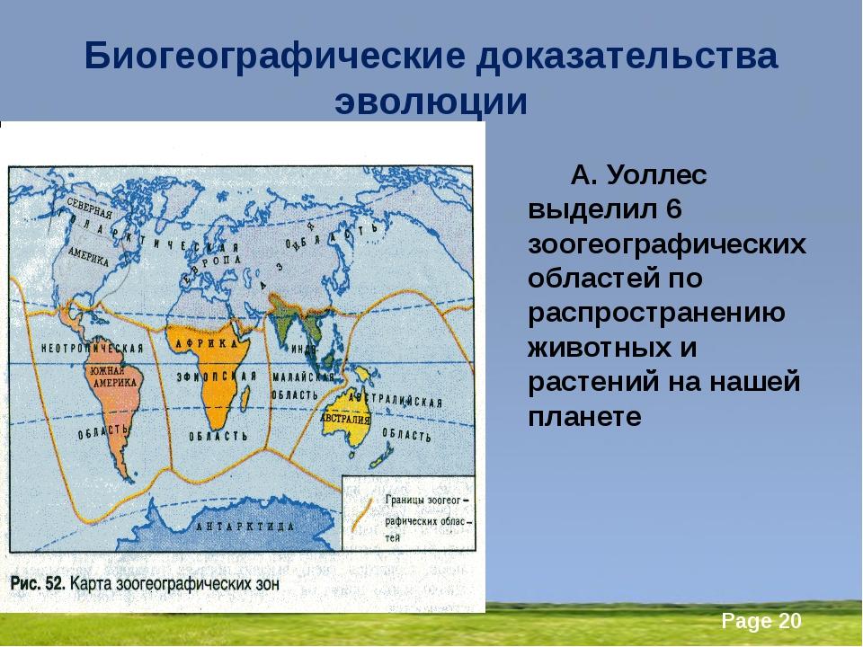 Биогеографические доказательства эволюции А. Уоллес выделил 6 зоогеографичес...