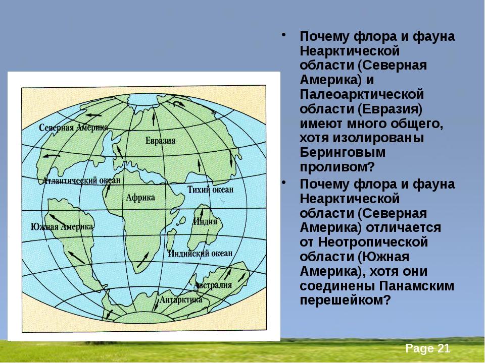 Почему флора и фауна Неарктической области (Северная Америка) и Палеоарктиче...