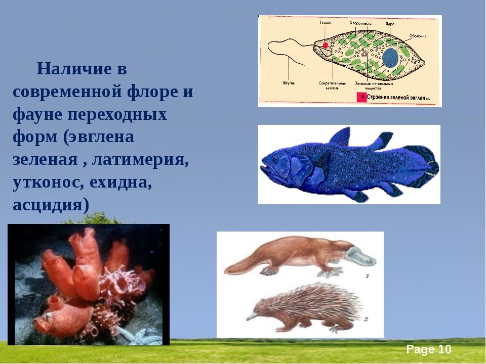 Наличие в современной флоре и фауне переходных форм (эвглена зеленая , лати...
