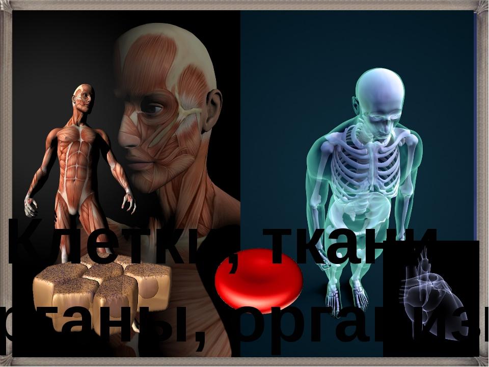 Клетки, ткани, органы, организм