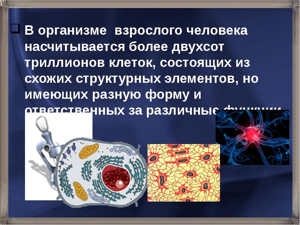 В организме взрослого человека насчитывается более двухсот триллионов клеток,...
