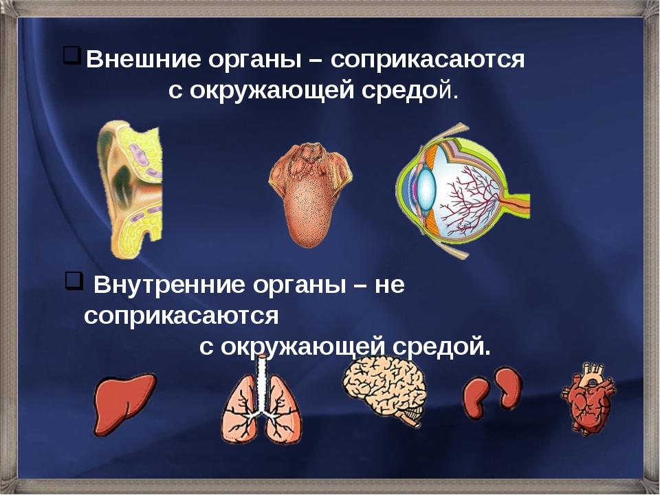 Внешние органы – соприкасаются с окружающей средой. Внутренние органы – не со...