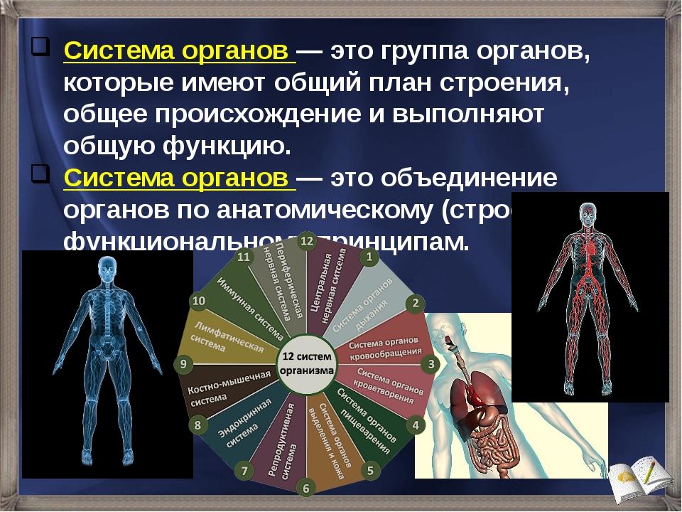 Система органов — это группа органов, которые имеют общий план строения, обще...