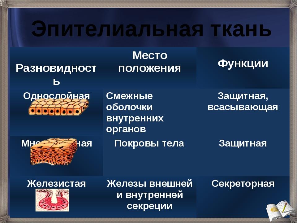 Эпителиальная ткань Разновидность Место положения Функции Однослойная Смежные...