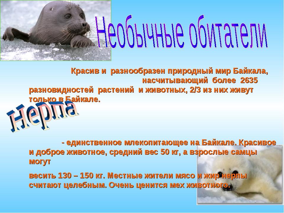 Красив и разнообразен природный мир Байкала, насчитывающий более 2635 разнов...
