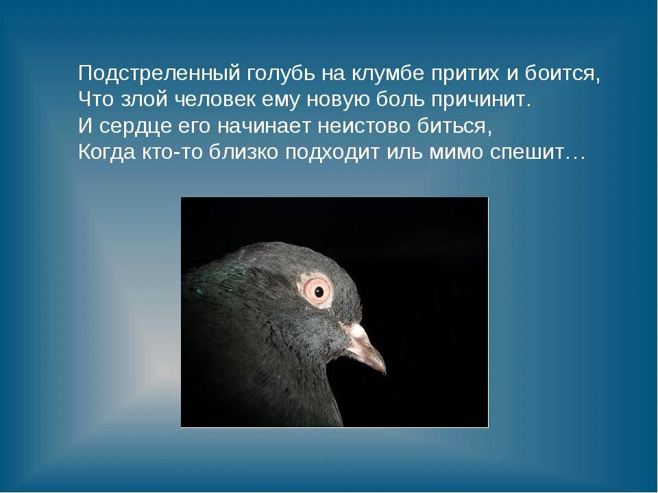 Подстреленный голубь на клумбе притих и боится, Что злой человек ему новую бо...