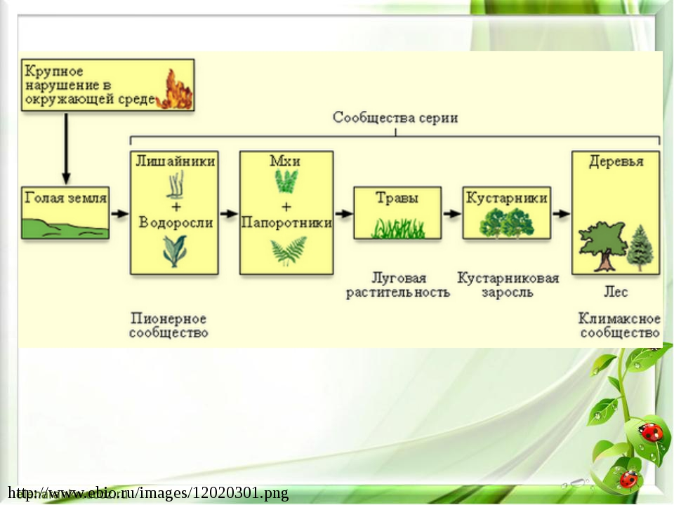 http://www.ebio.ru/images/12020301.png