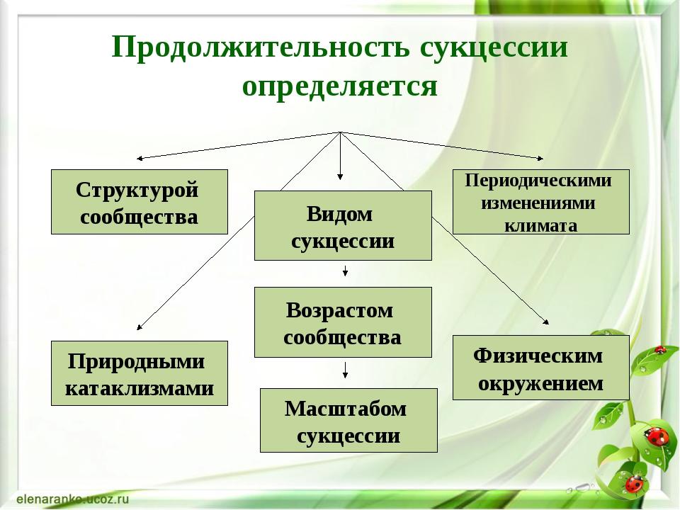 Продолжительность сукцессии определяется Структурой сообщества Видом сукцесс...