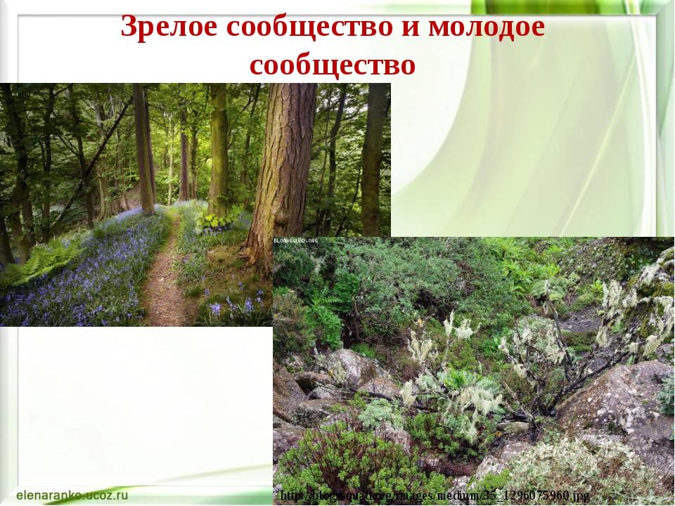 Зрелое сообщество и молодое сообщество http://blog-squad.org/images/medium/35...