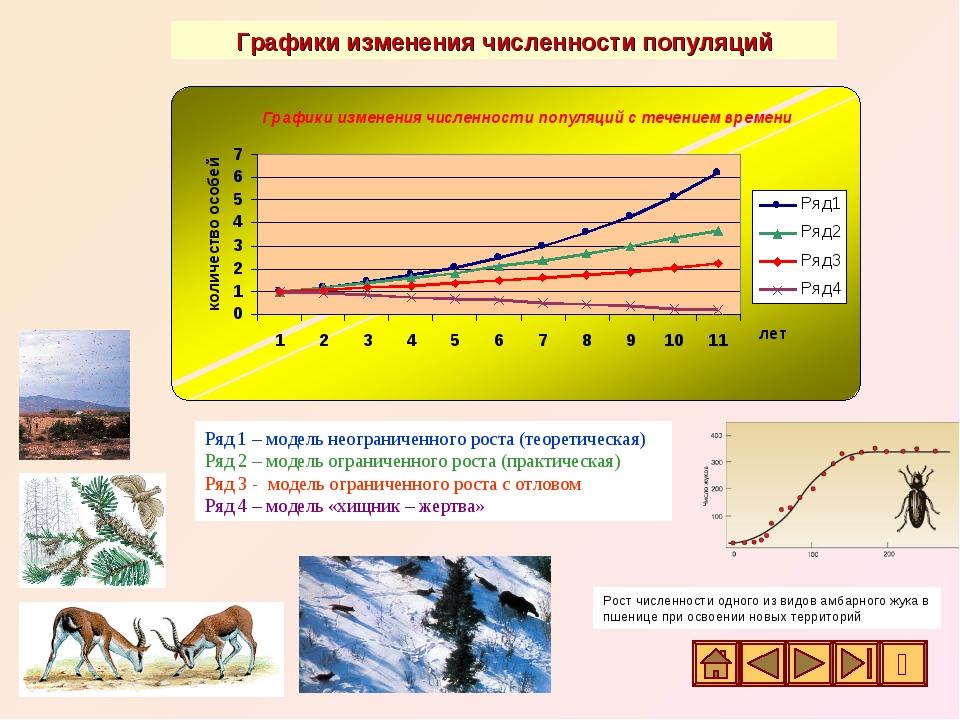 Ряд 1 – модель неограниченного роста (теоретическая) Ряд 2 – модель ограничен...