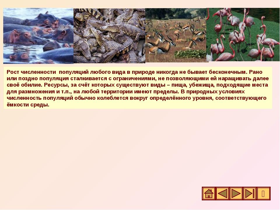 Рост численности популяций любого вида в природе никогда не бывает бесконечны...
