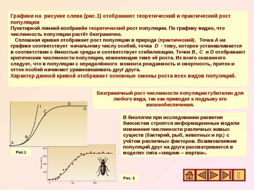 Графики на рисунке слева (рис.1) отображают теоретический и практический рост...