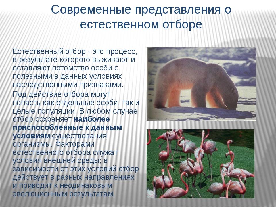 Современные представления о естественном отборе Естественный отбор - это проц...