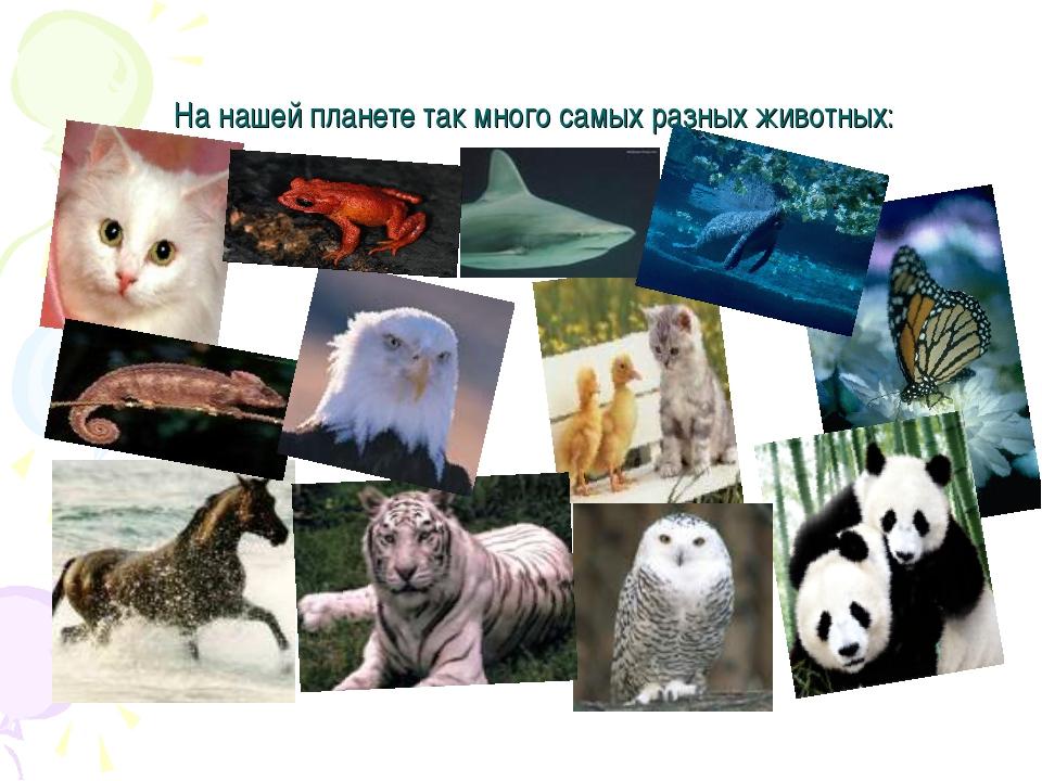 На нашей планете так много самых разных животных: