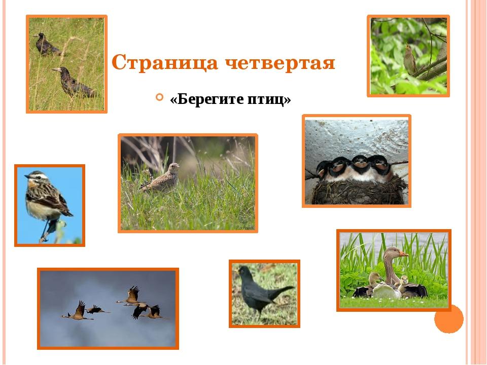 Страница четвертая «Берегите птиц»