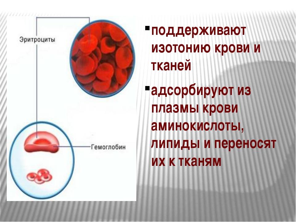 поддерживают изотонию крови и тканей адсорбируют из плазмы крови аминокислоты...