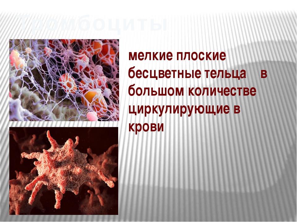 Тромбоциты мелкие плоские бесцветные тельца в большом количестве циркулирующ...