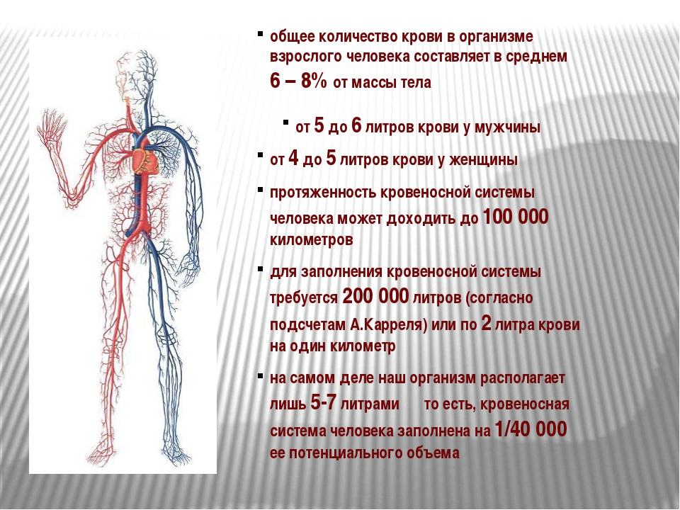 общее количество крови в организме взрослого человека составляет в среднем 6...