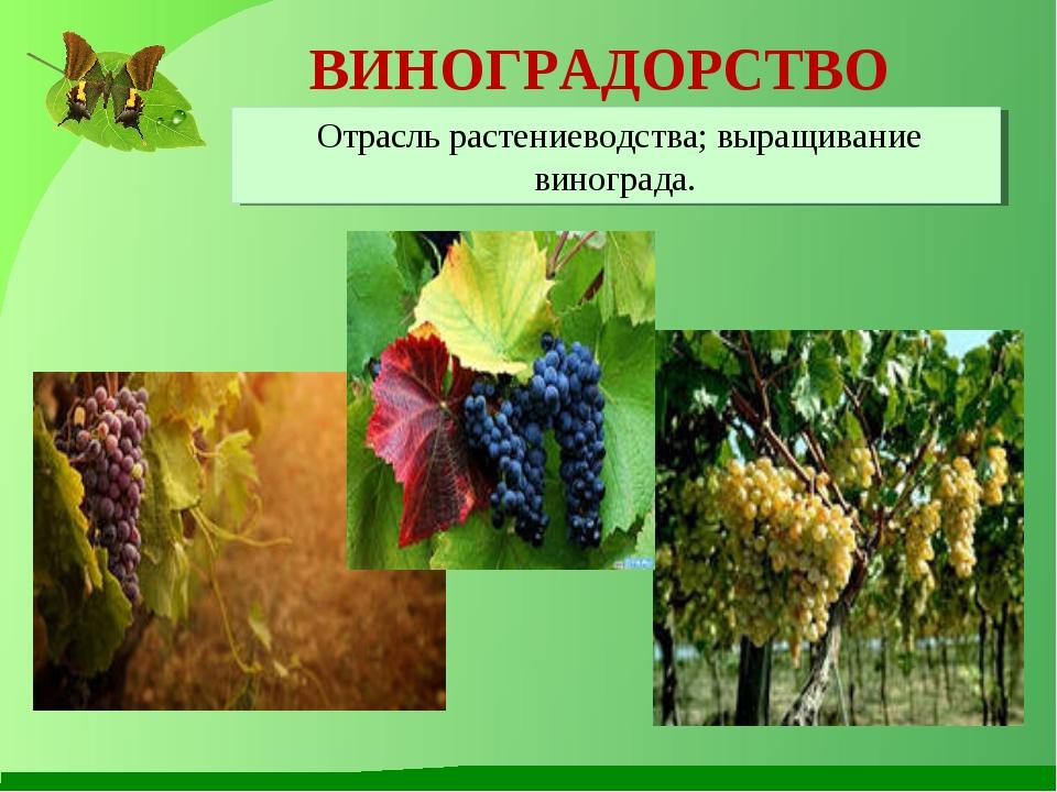ВИНОГРАДОРСТВО Отрасль растениеводства; выращивание винограда.