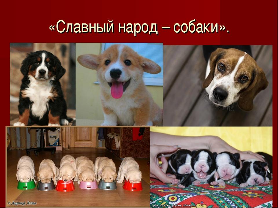 «Славный народ – собаки».