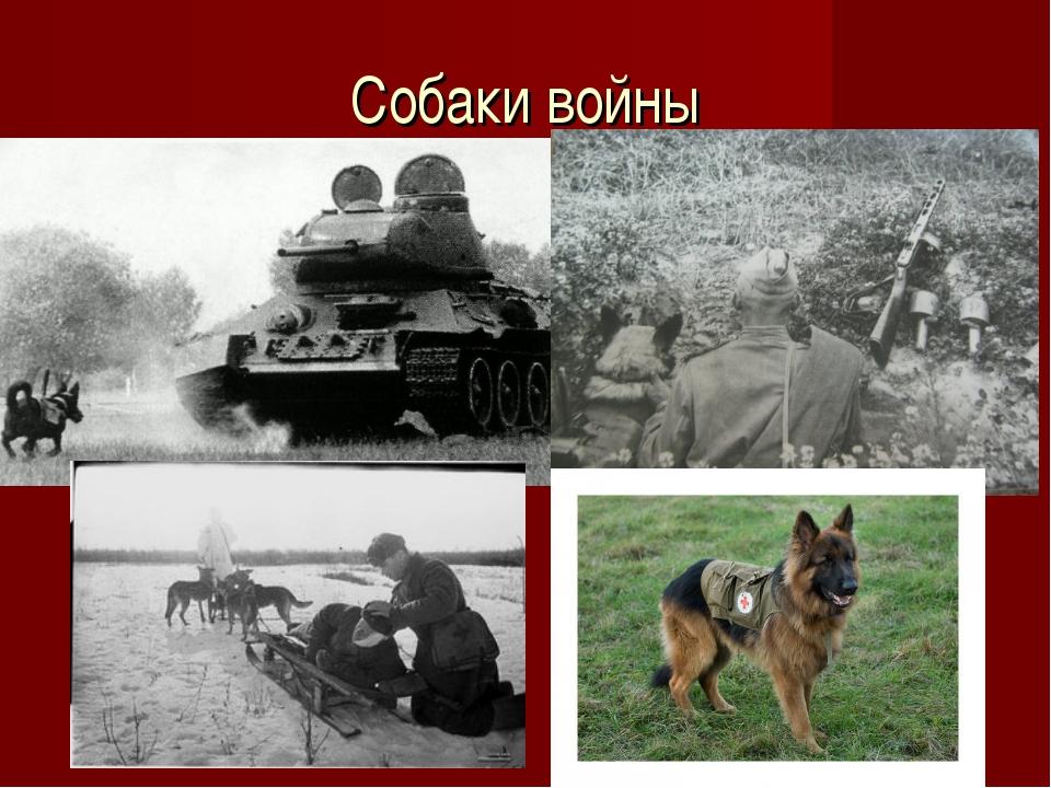 Собаки войны