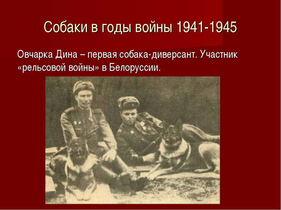 Собаки в годы войны 1941-1945 Овчарка Дина – первая собака-диверсант. Участни...