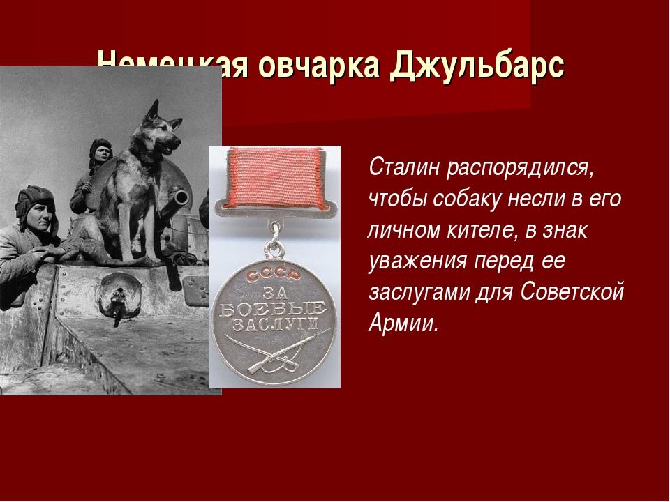 Немецкая овчарка Джульбарс Сталин распорядился, чтобы собаку несли в его личн...