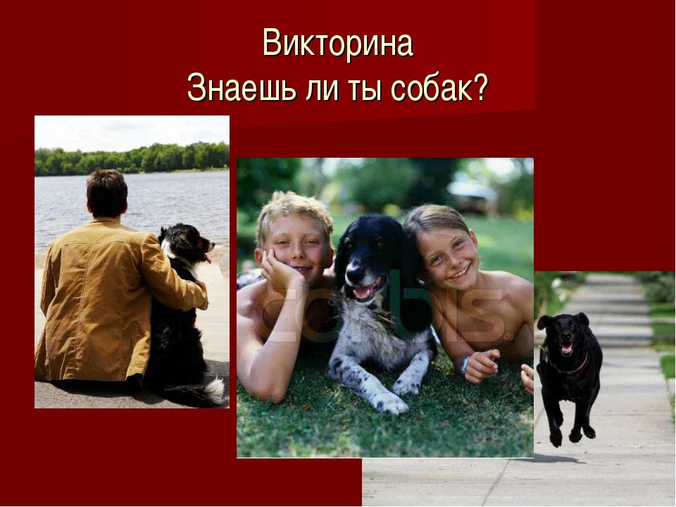 Викторина Знаешь ли ты собак?