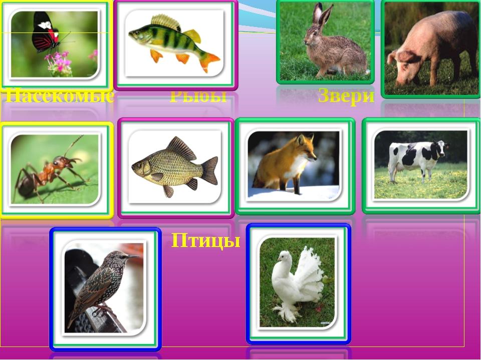 название групп животных с картинками том году семейным
