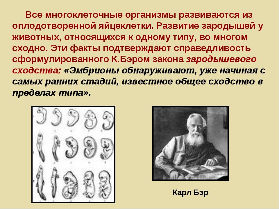 Карл Бэр Все многоклеточные организмы развиваются из оплодотворенной яйцеклет...