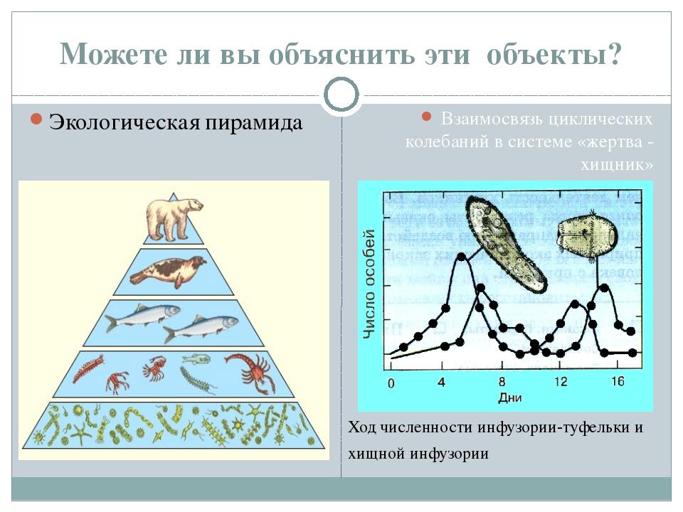 Можете ли вы объяснить эти объекты? Экологическая пирамида Взаимосвязь циклич...