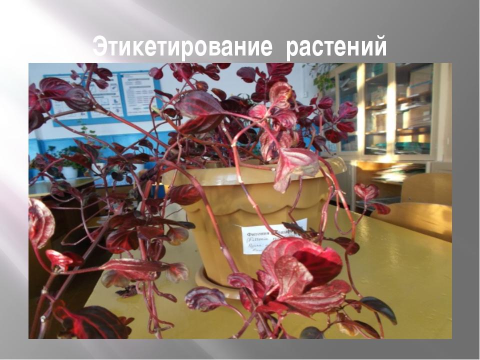 Этикетирование растений