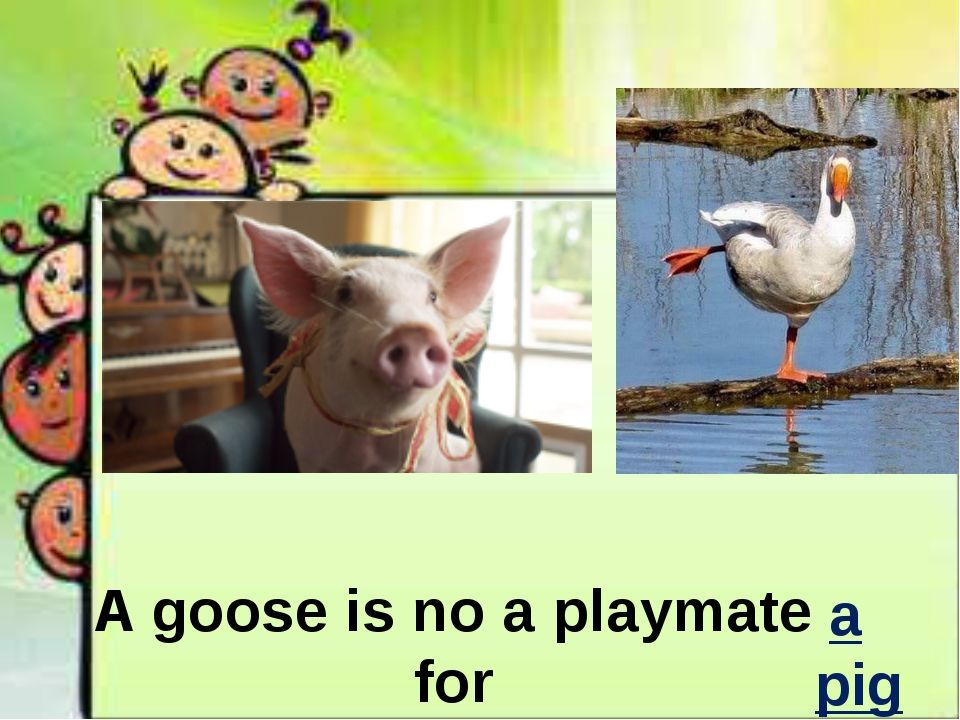 A goose is no a playmate for a pig