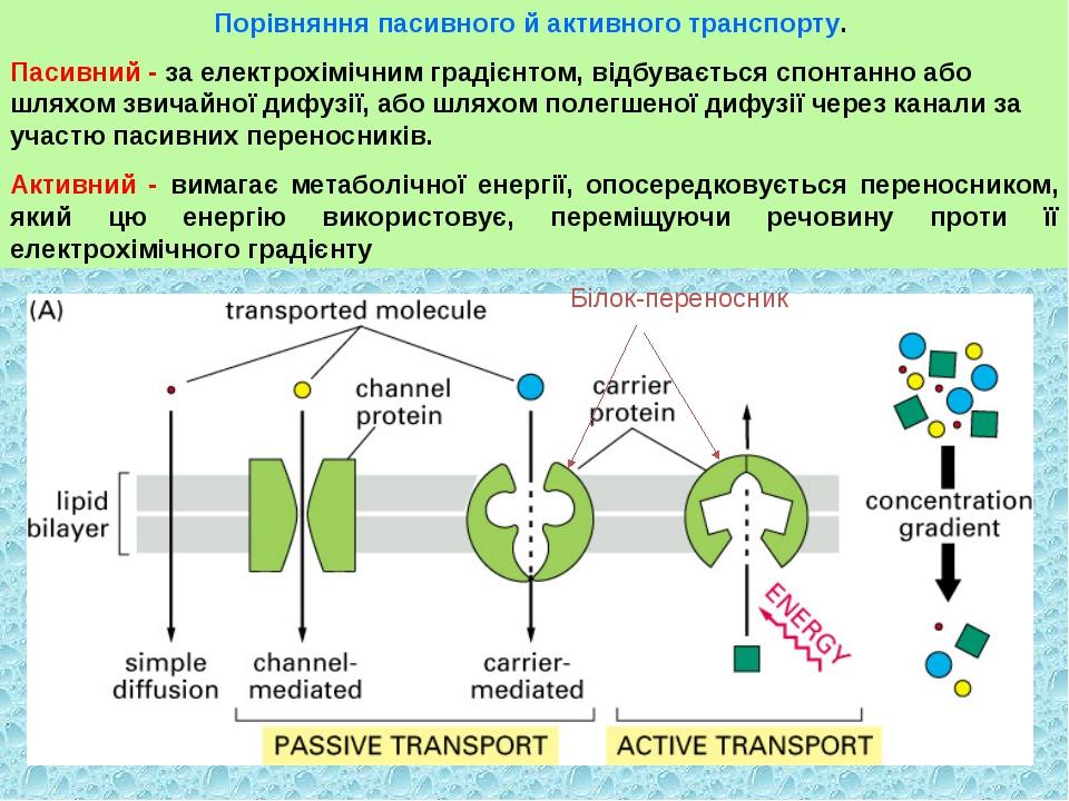 Порівняння пасивного й активного транспорту. Пасивний - за електрохімічним гр...