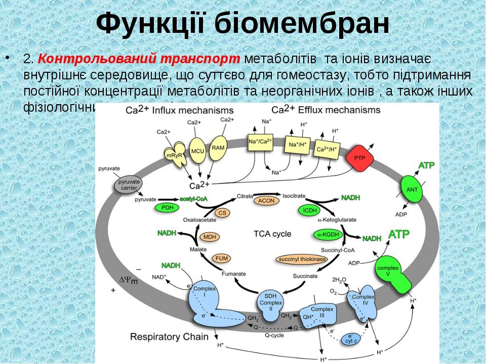 Функції біомембран 2. Контрольований транспорт метаболітів та іонів визначає...