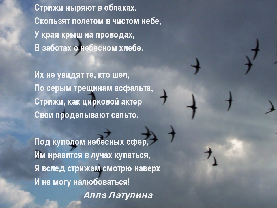 Стрижи ныряют в облаках, Скользят полетом в чистом небе, У края крыш на прово...
